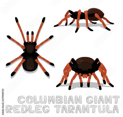 Columbian Giant Redleg Tarantula Cartoon Vector Illustration Canvas Print