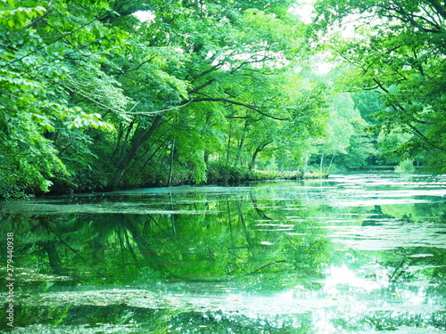 Fotografie, Obraz  北海道の風景 富良野 鳥沼公園