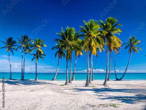 Foto auf Gartenposter Strand A Caribbean beach showing a line of palm trees on a white sandy beach with deep blue sky an azure sea.