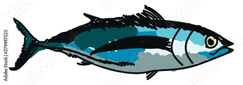 Albacore fish, illustration, vector on white background. Wallpaper Mural