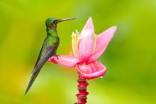 Bird With Flower In Tropic Jun...