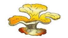 Oceanic Reef Algae Seaweed Coral Vintage Vector. Algae Decorative Organism Living On Ocean Or Sea Benthal, Aqua World Plant, Undersea Flora And Fauna Concept. Designed Mockup Monochrome Illustration