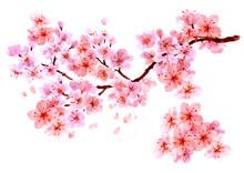 Sakura Watercolor Background F...