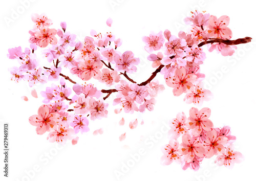 Photo  Sakura watercolor background for graphic design, hand painted on paper, sakura w