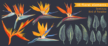 Set Of Floral Elements With St...