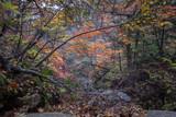 Fototapeta Na ścianę - 자연풍경-가을나무(울산바위)