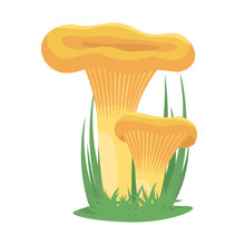 Two Chanterelle Mushrooms Grow...