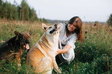 Stylish Boho Girl Playing With Her Cute Dogs In Grass And Wildflowers In Sunny Meadow In Mountains At Sunset. Traveling Together With Pets. Young Woman Caressing Her Golden Dog