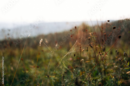 Fototapety, obrazy: Beautiful wildflowers and herbs with spider web in sunny meadow at sunset in mountains. Gathering herbs in mountains, natural floral wallpaper.