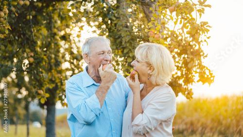 Fotografie, Obraz  Senior Frau und Mann essen einen Apfel an einem Abend im Spätsommer