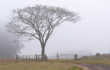 The Tree At The Farm Gate And The Fog