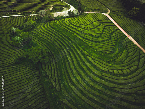 Garden Poster Rice fields Green tea terrace plantation Gorreana in fog from above, drone shot, Azores islands. The oldest, and currently only, tea plantation in Europe. Bird eye view, aerial panoramic view.