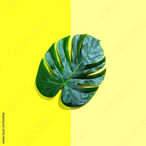 Fotografie, Obraz  Tropical plant Monstera leaf on a split tone background