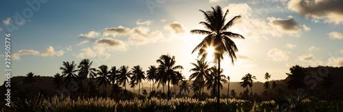Photo  Sunset on coconut and sugar canne plantation near Achada Fazenda in Santiago Isl