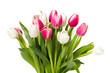 canvas print picture Tulpen
