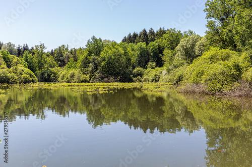 Fototapeten Forest river forest of Vaux, in Lorraine