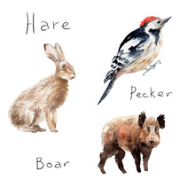 Watercolor Drawings Of Forest Animals: Hare, Rabbit, Woodpecker, Wild Boar
