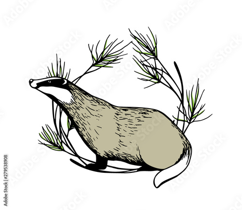 Canvas Print Hand drawn badger