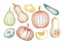 Pumpkins Big Set
