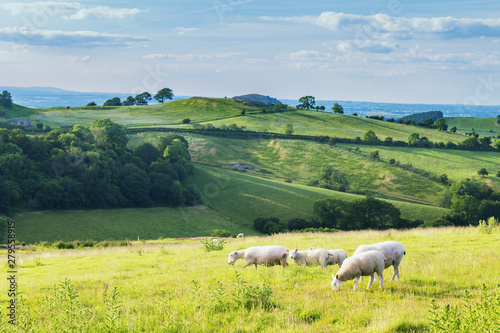 Fotobehang Schapen British Farming Fields at Summer in Shropshire, UK