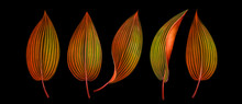 Set Of Exotic Tropical Leaves ...