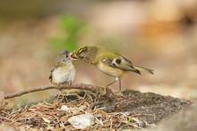British Garden Bird Feeding Yo...