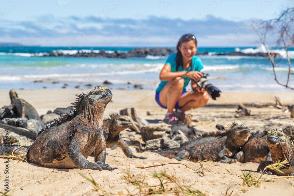 Fototapeta Ecotourism tourist photographer taking wildlife photos on Galapagos Islands of famous marine iguanas. Focus on marine iguana. Woman taking pictures on Isabela island in Puerto Villamil Beach.