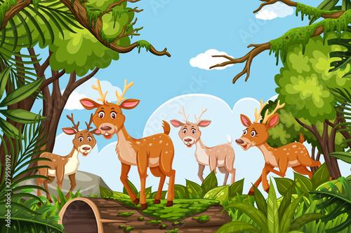 Deer in jungle scene Canvas Print
