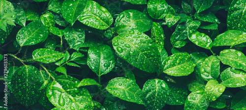 Nature green leaves with raindrop background texture