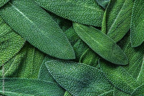 Fototapeta close up a herb sage leaf abstract texture background obraz