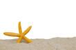 Leinwandbild Motiv starfish in sand of the secluded beach