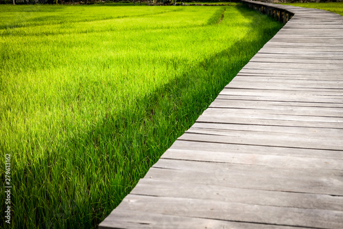 Montage in der Fensternische Lime grun wooden bridge footbridge walkway pathway along rice paddy field