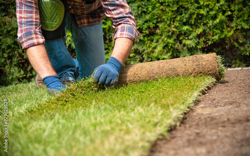 Obraz Installing turf rolls in the garden - fototapety do salonu