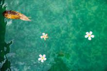 Plumeria Flowers And Leaves Fl...
