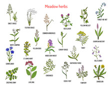 Wild Meadow Herbs And Grasses
