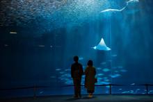 Silhouette Couple Look At Fish In Aquarium