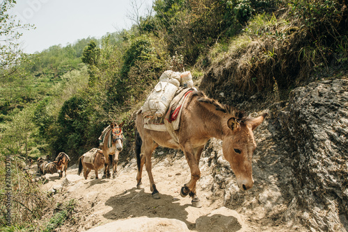 donkey laden with a load against the backdrop of beautiful naturel in Nepalese Himalayas Wallpaper Mural