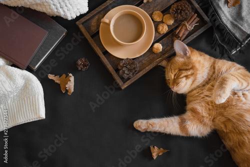 Cadres-photo bureau Chat Autumn hygge