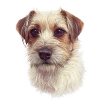 Portrait Of Cute Puppy Isolated On White Background. Close Up White And Red Young Rough Coated Jack Russell Terrier Dog. Animal Art Collection: Dogs. Design Template. Good For Print T-shirt, Pillow