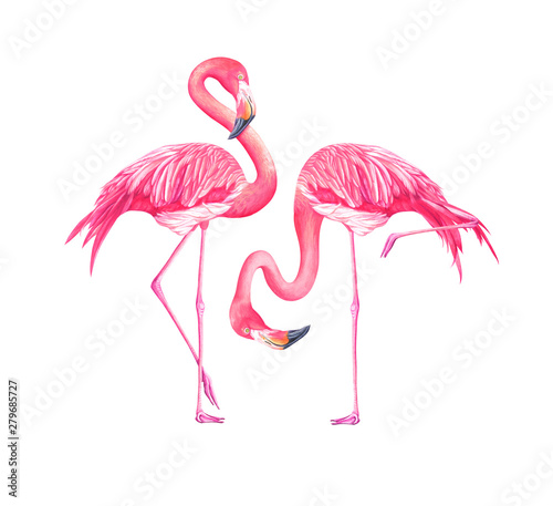Canvas Prints Flamingo Bird Set of watercolor exotic flamingos isolated on white background