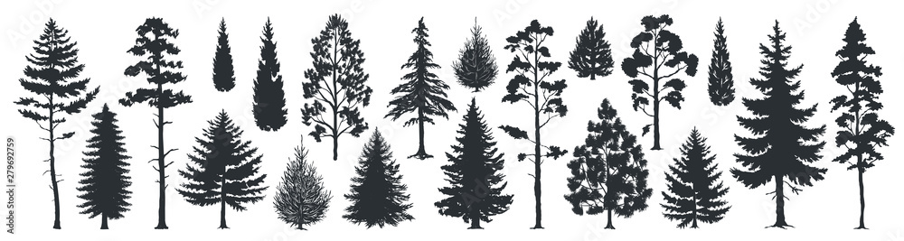 Fototapety, obrazy: Pine tree silhouettes. Evergreen forest firs and spruces black shapes, wild nature trees templates. Vector illustration woodland trees set on white background