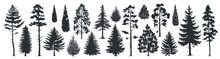 Pine Tree Silhouettes. Evergre...