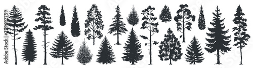 Pine tree silhouettes. Evergreen forest firs and spruces black shapes, wild nature trees templates. Vector illustration woodland trees set on white background - 279692759