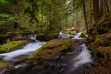 Fallen Logs At Panther Creek F...