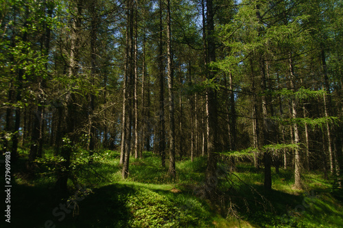 forests in the Isera Moutains in summer