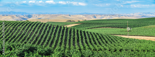 Stampa su Tela  California Vineyards: Rolling hills, valleys, rows of grapevines and wineries are common in the wine country fields of rural Northern and Central California such as Napa, Sonoma and Monterey County