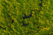 Narrow Winding Strip Of Water Among The Greenery , Swampy Area, Top View, Background With Drone