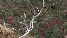 Dead Tree Overhang Valley Of Colorful Australian Fauna Trees