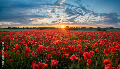 Foto op Canvas Poppy panorama of a field of red poppies against the background of the evening sky.