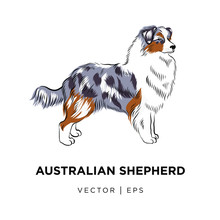 Tricolor Australian Shepherd D...